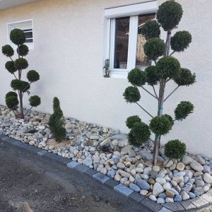 plantation cyprès boule & spirale.